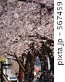桜吹雪 散る 桜並木の写真 567459