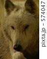 銀狼 シンリンオオカミ オオカミの写真 574047