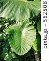 石垣島の観葉植物 582508