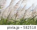 石垣島のサトウキビ畑 582518