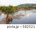 石垣島のマングローブ 582521