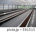 農業用温室 養液栽培 作付前 591515