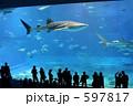 美ら海水族館 ジンベイザメ サメの写真 597817