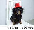 モデル犬 599755