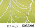 くもの巣 水玉 クモの巣の写真 603396