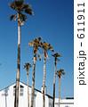 椰子 椰子の木 ヤシの写真 611911