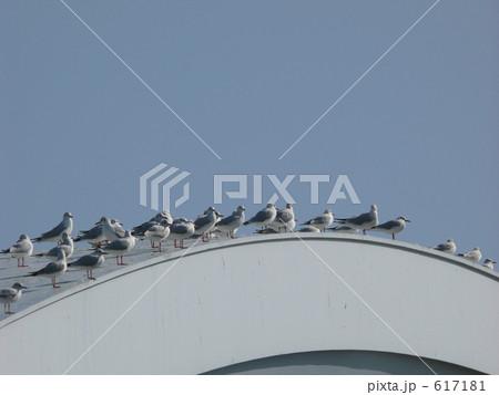 橋の上の鳥群 617181
