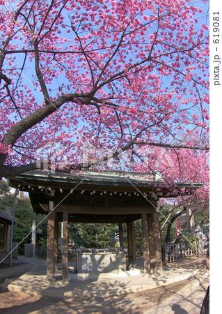 品川区荏原神社の梅 619081