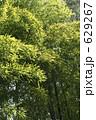 タケ たけ 竹林の写真 629267