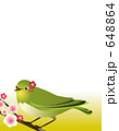 目白 メジロ 鳥のイラスト 648864
