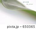 green leave 650365