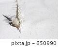 貝と白砂 650990