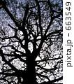 樹木の影 663549