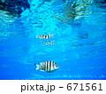 海面に映る魚の姿 671561