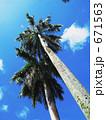 GUAMの青い空と椰子 671563