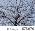 雪が積もった木 673070