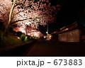 カワヅザクラ 河津桜 夜桜の写真 673883