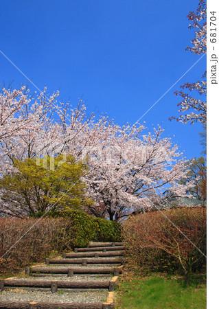 公園の休息所へ続く桜の小路 681704