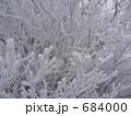 雪に覆われた木の枝2 684000