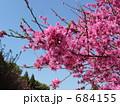 桃(品種名:菊) 684155