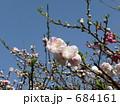 桃(品種名:源平) 684161