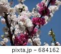 桃(品種名:源平) 684162