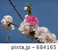 桃(品種名:源平) 684165