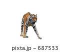 多摩動物公園のアムールトラ 687533