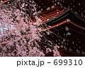 ベニシダレ ベニシダレザクラ 紅枝垂桜の写真 699310