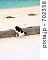 海 猫 海岸の写真 702358