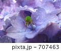 蜘蛛の雨宿り 707463