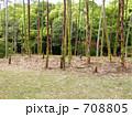 たけのこ 筍 竹の子の写真 708805