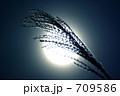 穂 十五夜 月見の写真 709586