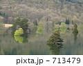 樹木 713479