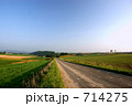 一本道 美瑛 畑の写真 714275