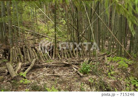 竹林で椎茸栽培 715246