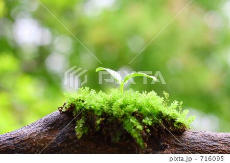 倒木に再生する森のイメージ 716095