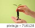 環境問題 エコ 発芽の写真 716128