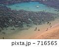 サンゴ 716565