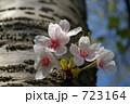 ソメイヨシノ 723164