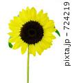 ひまわり 724219