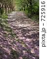 桜の積もる道 725916