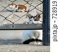 遠くを見つめる猫 728919