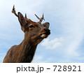 動じない牡鹿 728921