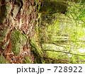 屋久島の森林 切株更新 728922