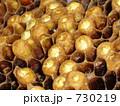 日本蜜蜂の子 730219