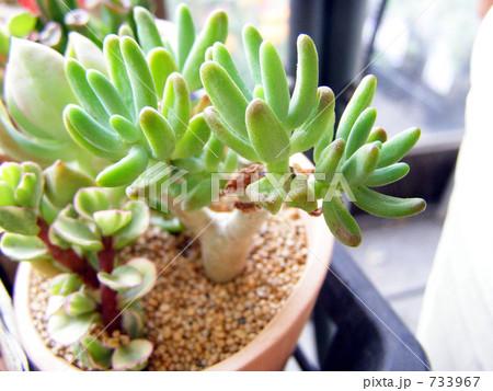 多肉植物のミニ鉢 733967