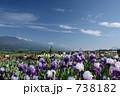花畑 アイリス ジャーマンアイリスの写真 738182
