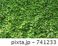 つたの壁 009b 741233