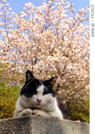 猫 741815